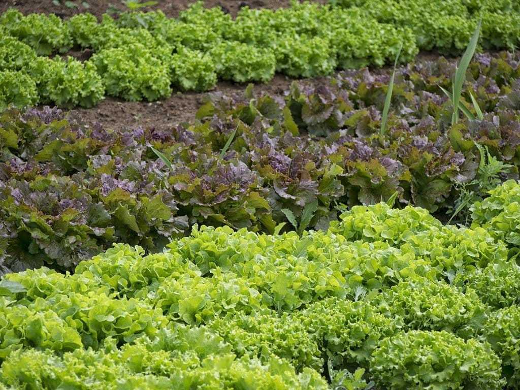 Qu'est-ce que l'agriculture de conservation des sols ?